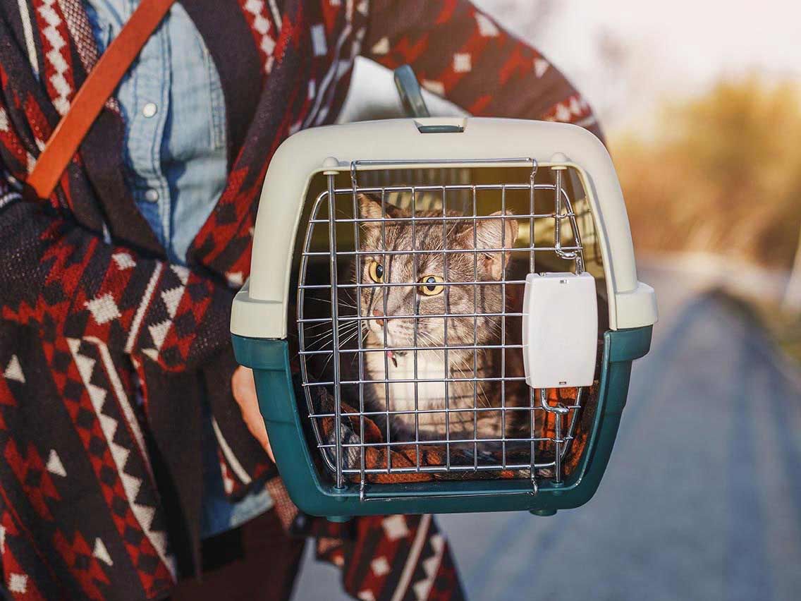 Cat with her owner going to their new home in her carrier