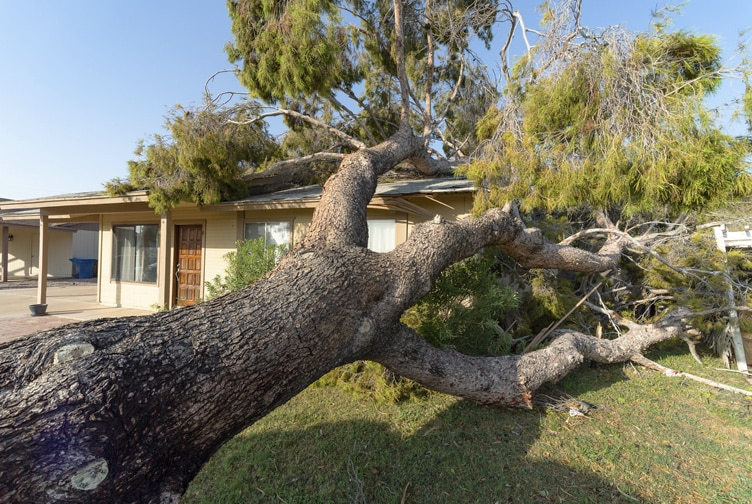 Tree severely damages a house.