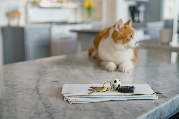Cat sits on top of a kitchen counter.